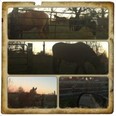 Horses around the gate